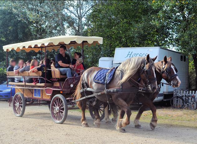 centre-equestre-la-pommeraye-maine-et-loire-caleche
