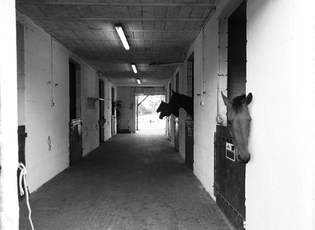centre-equestre-la-pommeraye-maine-et-loire-ecuries